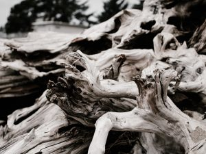 Driftwood Home Decor