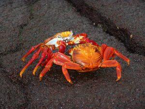 Crab Decor & Accents